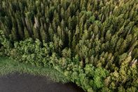 Finnish Forests as EU Announce Forestry Strategy In Green Plan