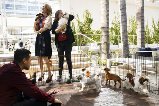 Life on Milken's Edges: After-Parties, Yoga at Dawn, Puppies
