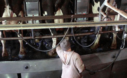 N.Y. Dairies Seek Migrant Milkers so Yogurt Boom Doesnt Sour