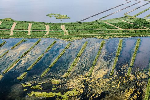 A restoration site for eroded wetlands near the town of Pointe Aux Chenes, an unincorporated community located in south Terrebonne Parish.