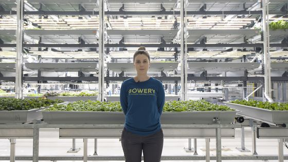 Vertical Farms Rush to Improve Kale Salad on a Path to Profitability
