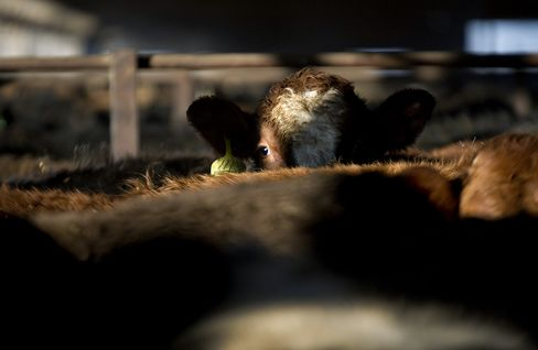 Beef King Sees U.S. Cattle Price Rebounding Amid Shrinking Herds