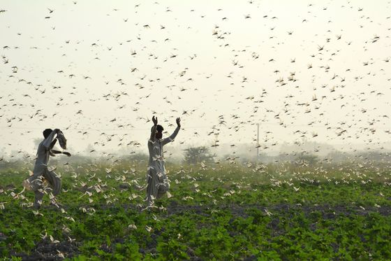 AI Is Becoming a New Weapon in the Battle Against Crop Pests