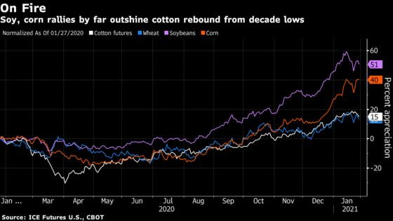 U.S. Cotton Output Undercut by Rally in Grains
