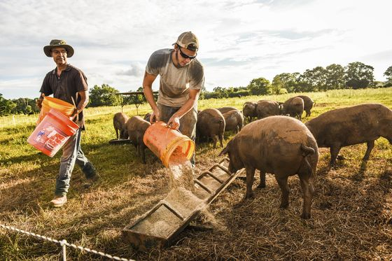 It's a Great Time to Be a Fancy Pork Farmer