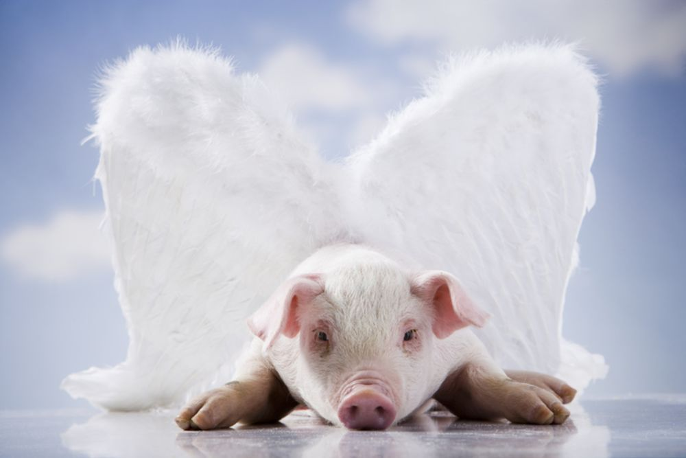 Cars Might Fly (When Pigs Do)