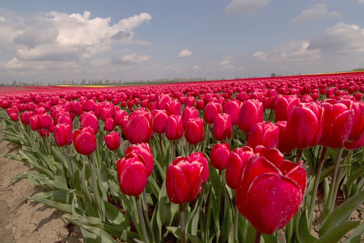 Bitcoin Is the Tulipmania That Refuses to Die