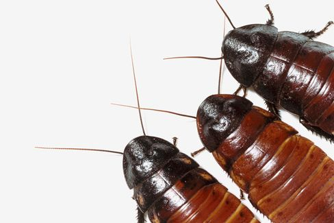 The Creepy World of Office Pests