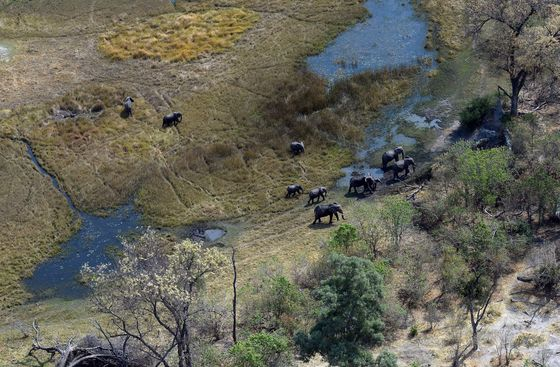 First-Ever Aerial Survey to Count Some 200,000 African Elephants