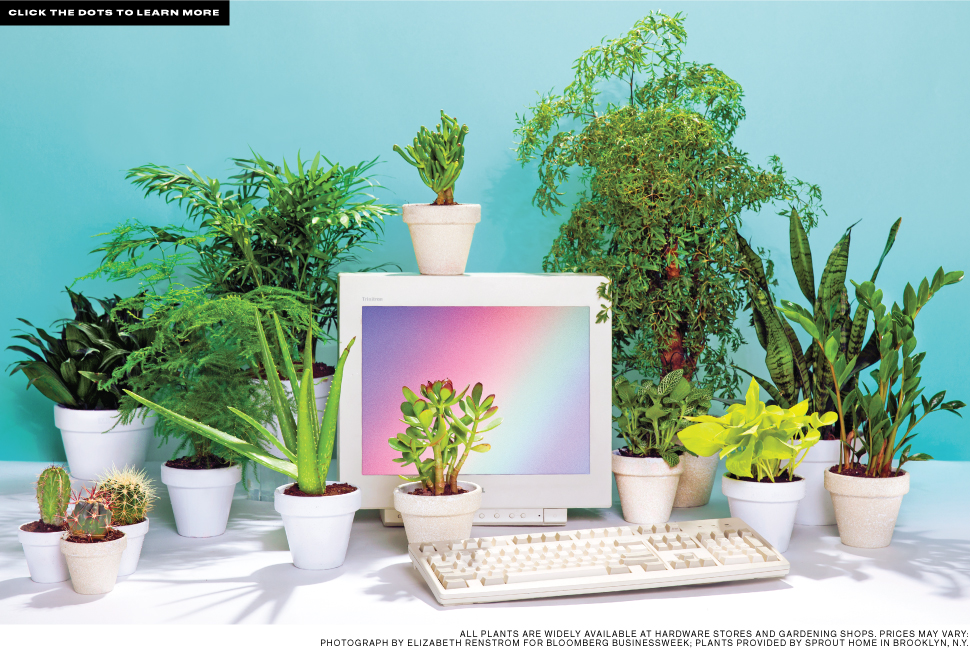 best desk plants 12 for the office bloomberg best office plant no sunlight