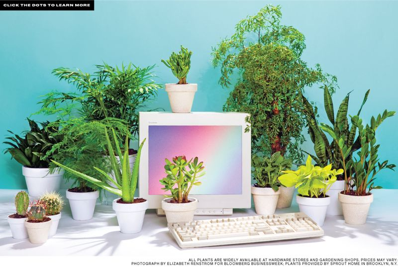 Merveilleux Best Desk Plants: 12 For The Office