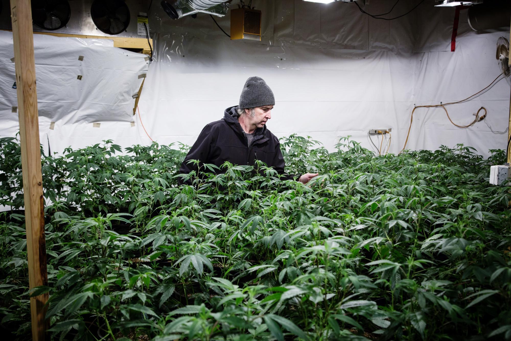 With $800-an-Ounce Bud, Pot Artisans Go High End