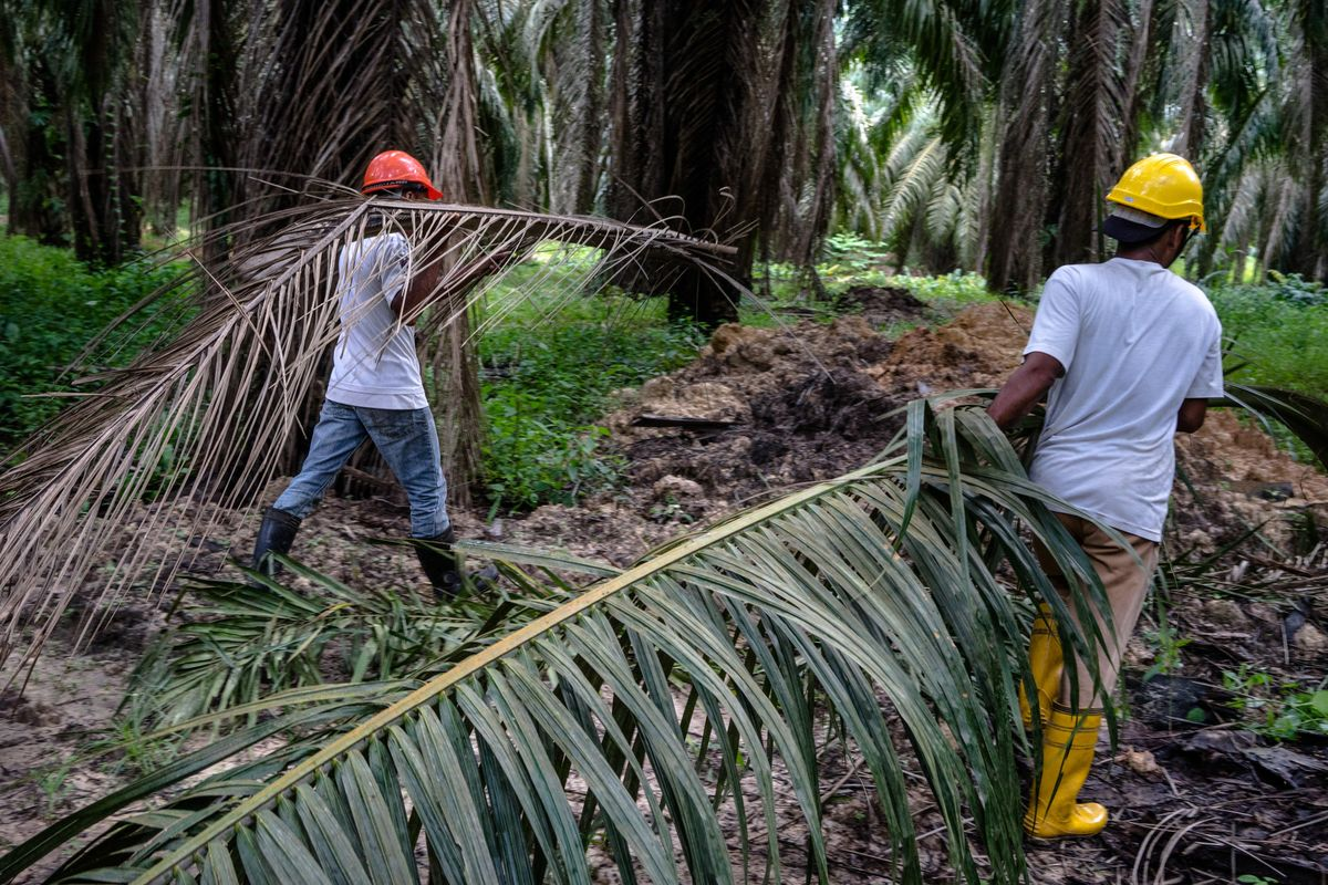 Malaysia Sees U.K. Trade Deal With Palm Producers After Brexit