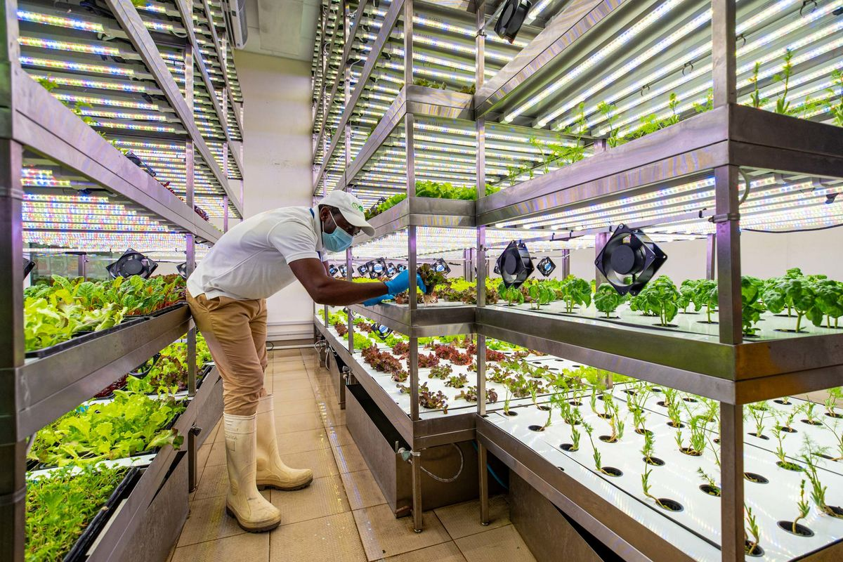 Vertical Farming's Success Depends on the Cheapest Lightbulb