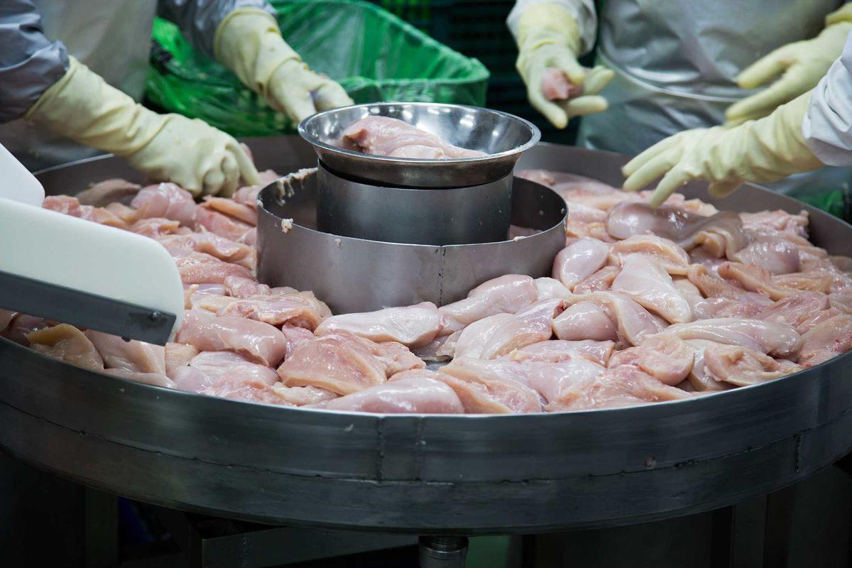 Denied Breaks, U.S. Poultry Workers Wear Diapers on the Job