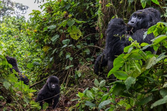 Congo Approves Oil Deal That May Encroach on World Heritage Site