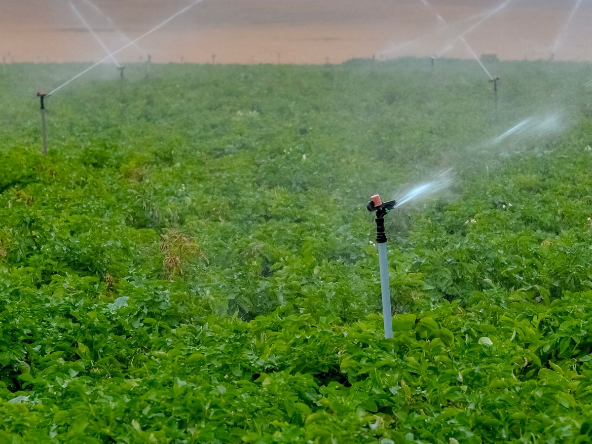 Indian Irrigation Company Cut to 'Selective Default' by S&P