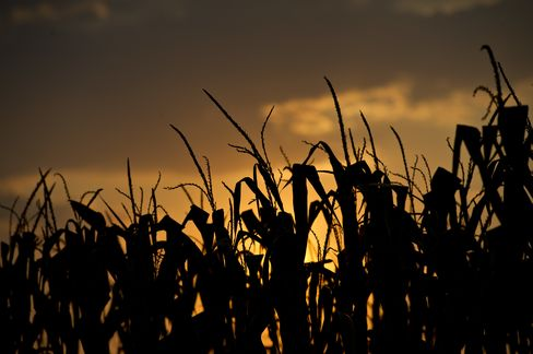 Corn Rises Near Record as Asia Stocks Advance on Fed Speculation