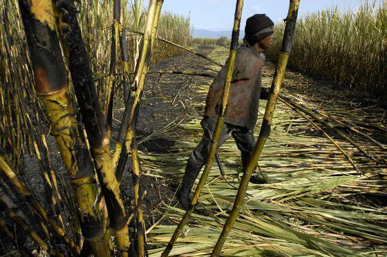 Farmers' Group, Unions Blast South African Land Seizure Plan