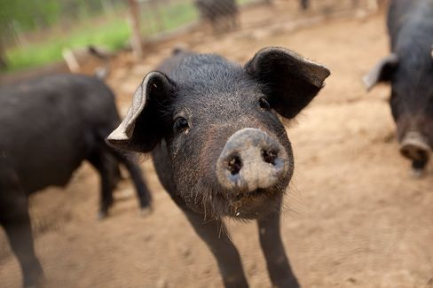 Chinese Pigs Eating Soy Cut U.S. Supply to 1965 Low
