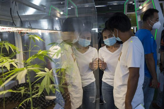 Big Business Eyes Marijuana-Infused Food as Thai General Liberalizes