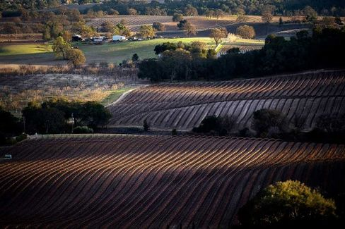 No Relief for Parched California Farms, But the Wine's OK