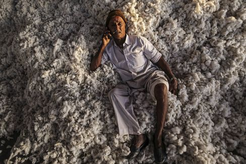 Cotton Harvest And Production As World Stockpiles Forecast To Be Second-Largest Ever At End Of Season