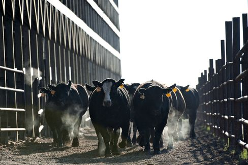 Cattle Futures Rebound From Biggest Drop in 11 Months on Mad Cow