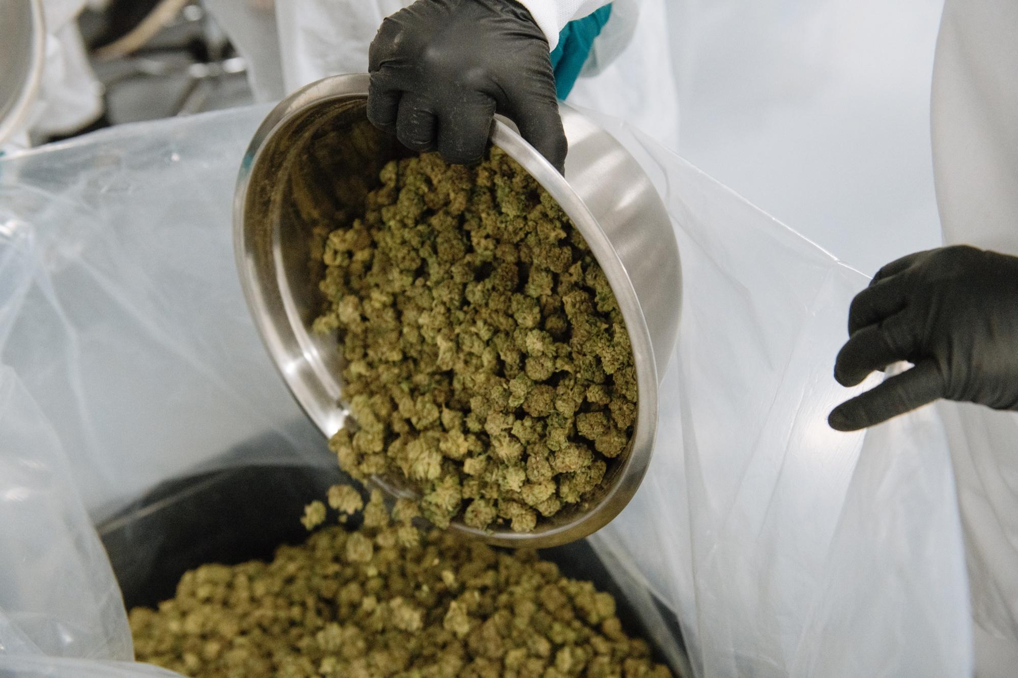 CannTrust Tumbles Again as Marijuana License at Risk - Bloomberg