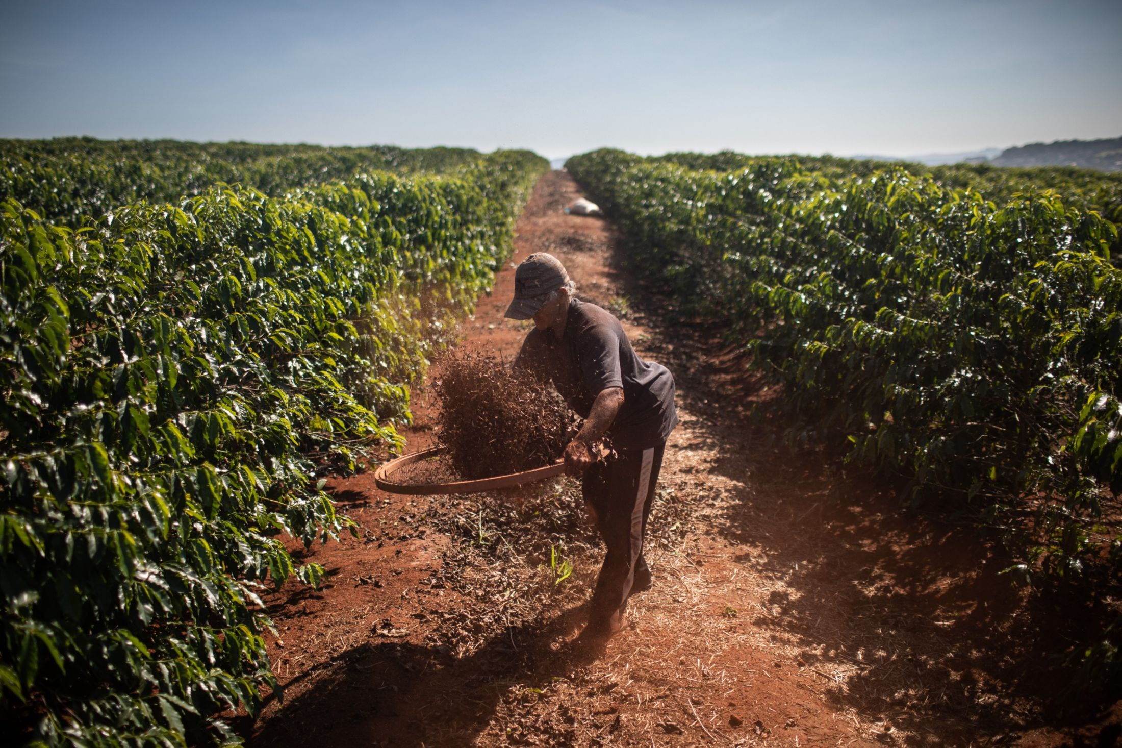 A worker harvests coffee on a farm in Alfenas, Minas Gerais state, Brazil, on Tuesday, May 28, 2019.