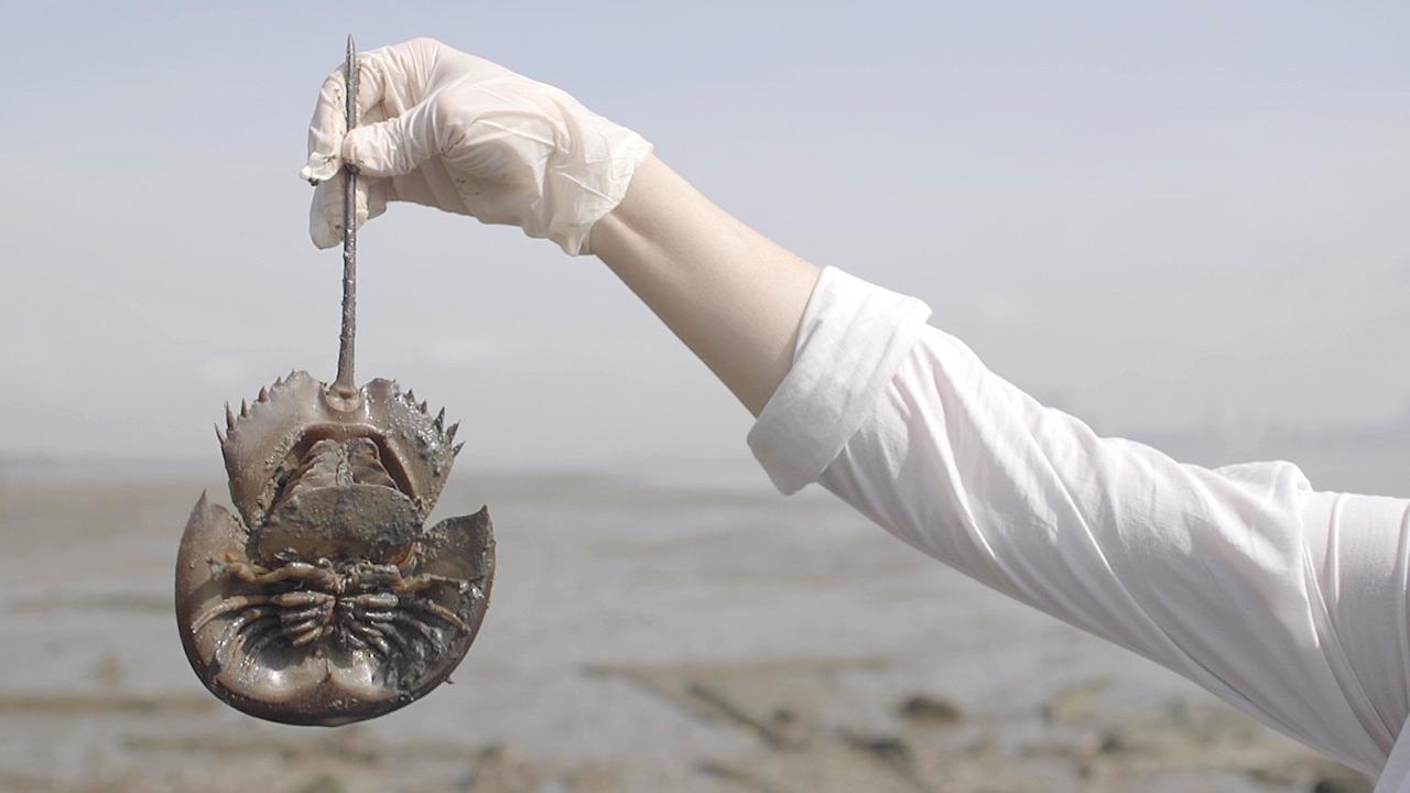 How Big Pharma Could Save The Horseshoe Crab - Bloomberg