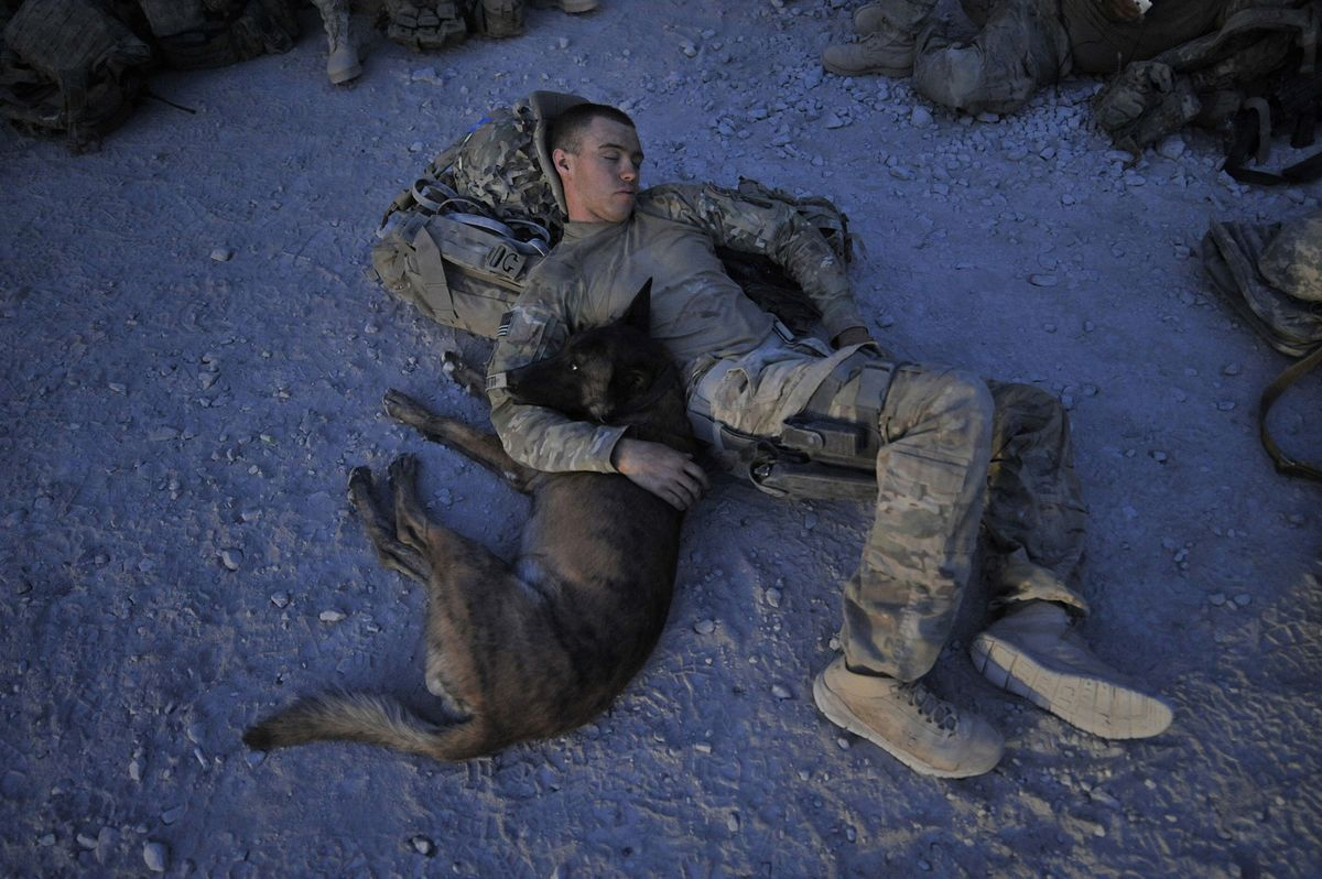 Military Dogs Are Becoming An