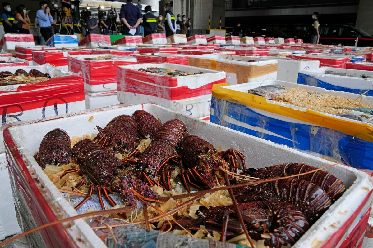 Hong Kong Seizes $540,000 of Australian Lobsters Believed Heading to China