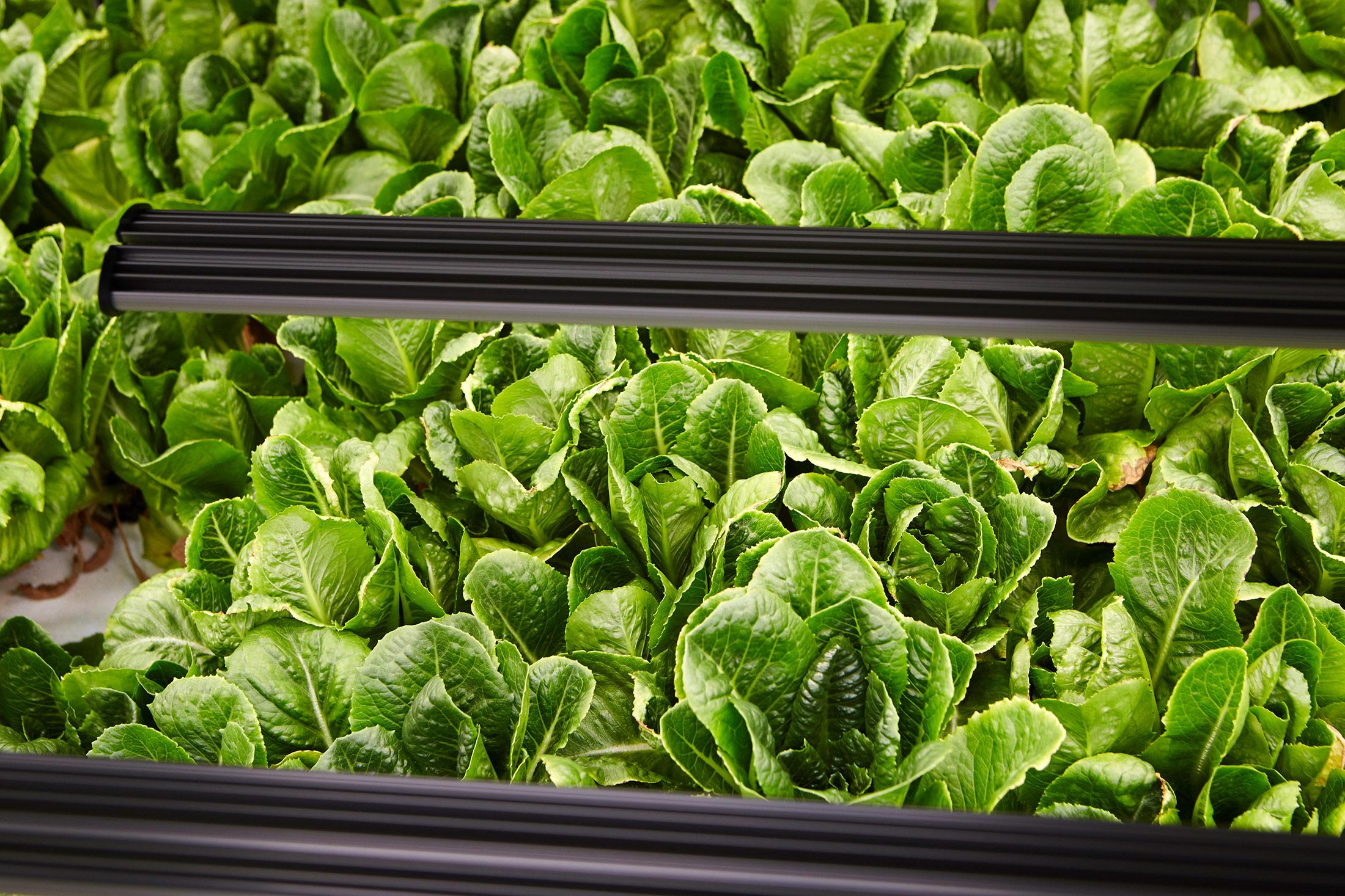 An Amazon Veteran Joins Indoor Farming Startup - Bloomberg