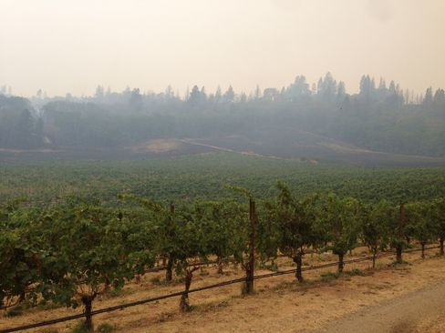 Though the Valley Fire fire charred hundreds of forest acres on Hawk and Horse Vineyards' 1,300-acre property, the 18-acre biodynamic vineyard was barely touched.