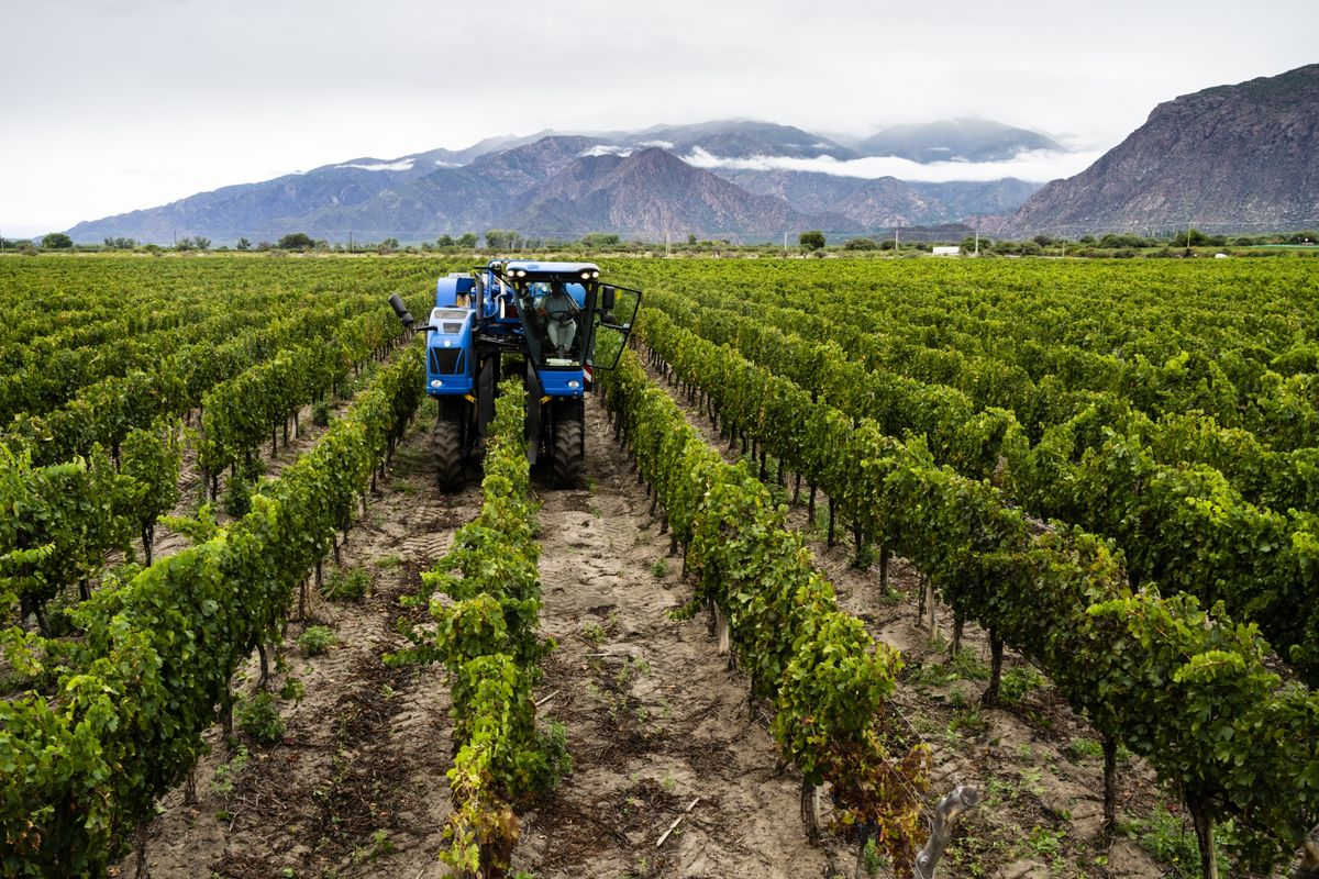 High-Altitude Argentine Winemaker Is Profiting From Peso's Fall