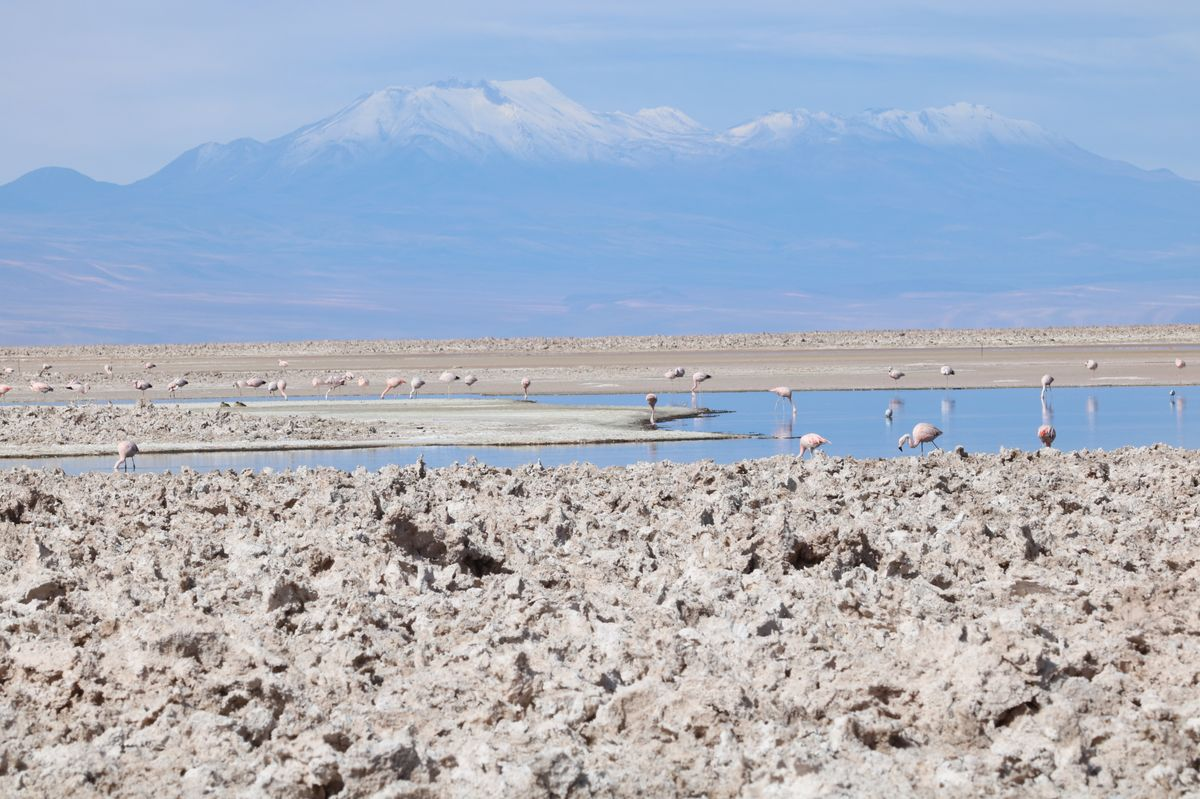 Chilean Lithium Prices Decline Even as Demand Soars