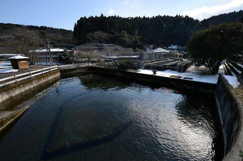 Miyazaki Prefectural Fisheries Research Institute sturgeon farm