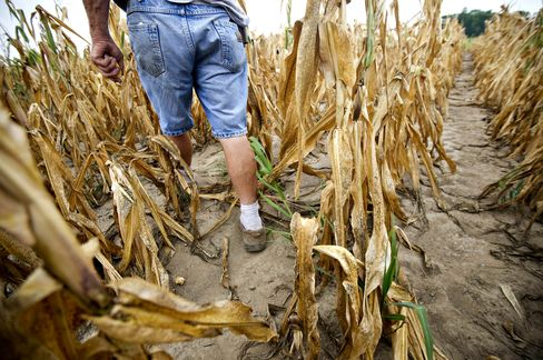 Good Dirt Gone Dry Wilting Corn Crop as Food Costs Rally