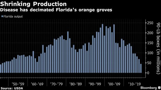 Florida's Orange Crop Is Bouncing Back From Bugs and a Hurricane