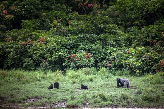 Gabon Pitches NewFunding Model to Protect Africa's Amazon