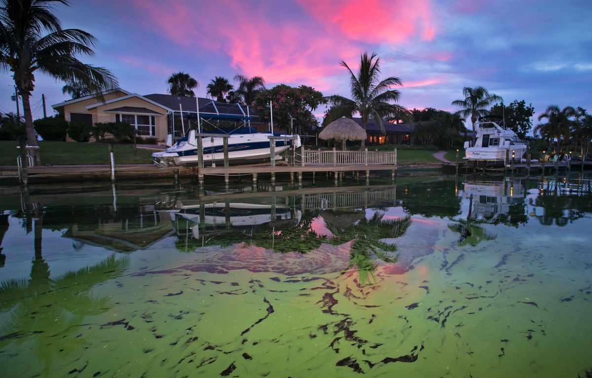 toxic green slime and red tide are ruining florida s gulf coast