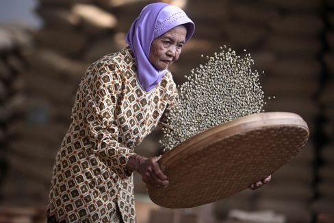 Indonesian Coffee Harvesting & Processing