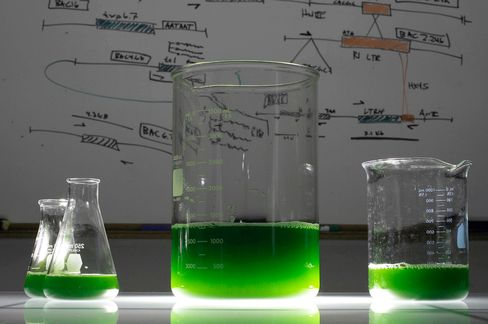 Green Micro Algae Manufacturing
