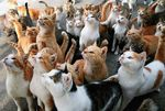 1485303822_japan cat