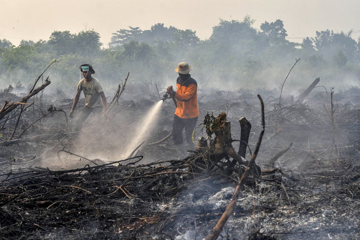 Forest Fires Cost Indonesia $5.2 Billion in Economic Losses