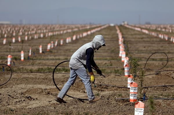 A deepening drought and new regulations are causing some California growers to consider an end to farming.