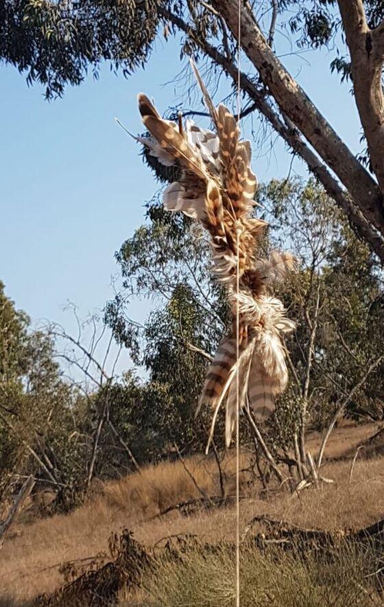 Gaza's Latest Weapon? Arson Bird Found Near Border With Israel
