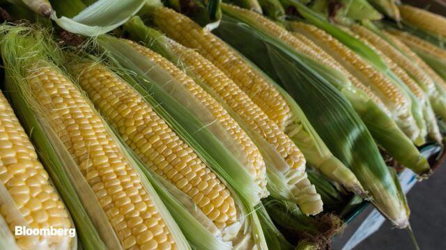 Severe Weather US: Record US Corn Acres Unplanted - Bloomberg
