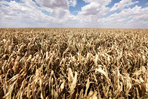 Drought Stalks the Global Food Supply